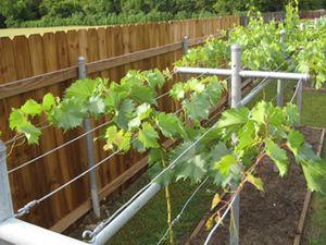 Как сделать под виноград