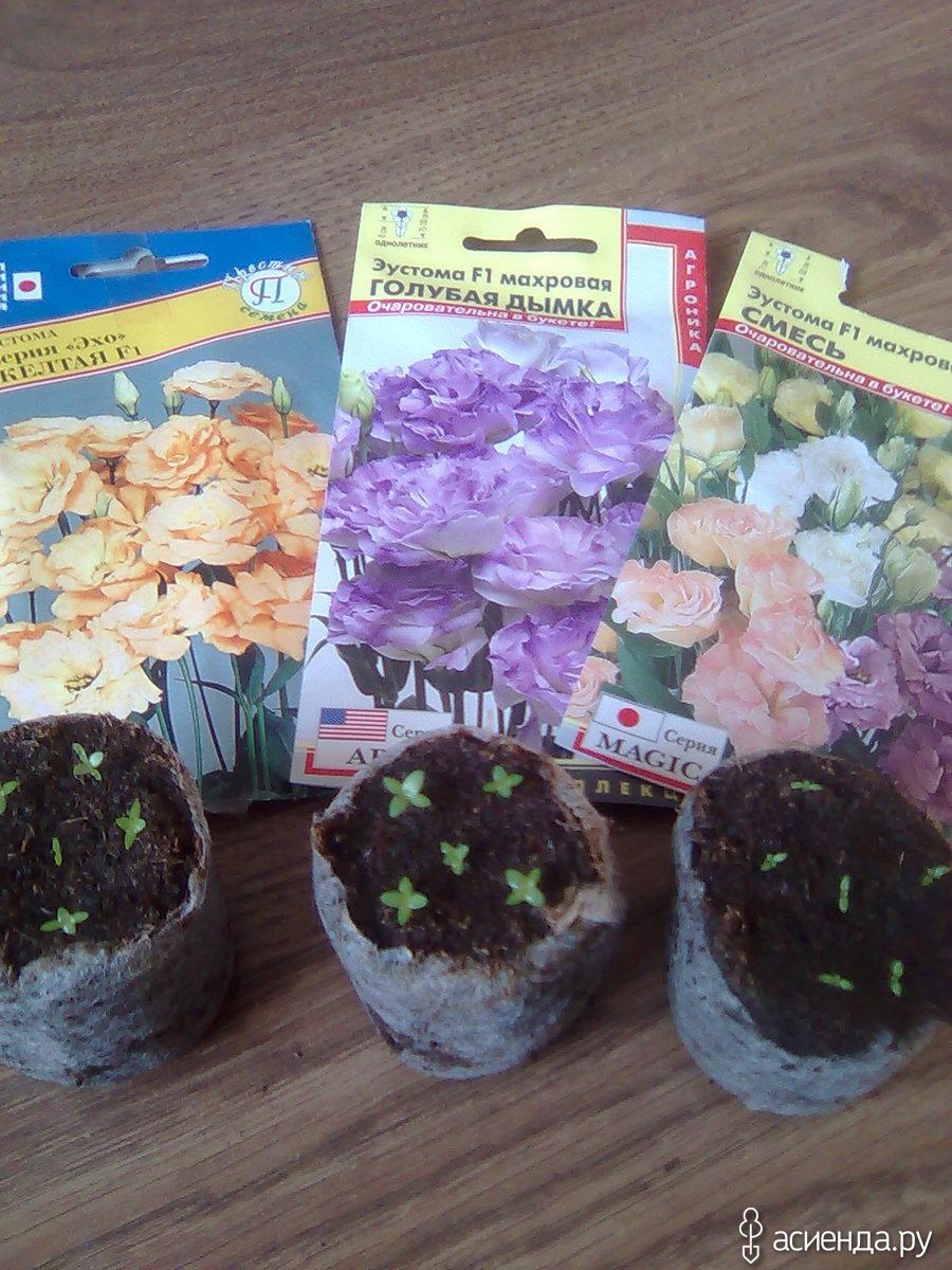 Когда сажать семена рассаду по лунному календарю 57