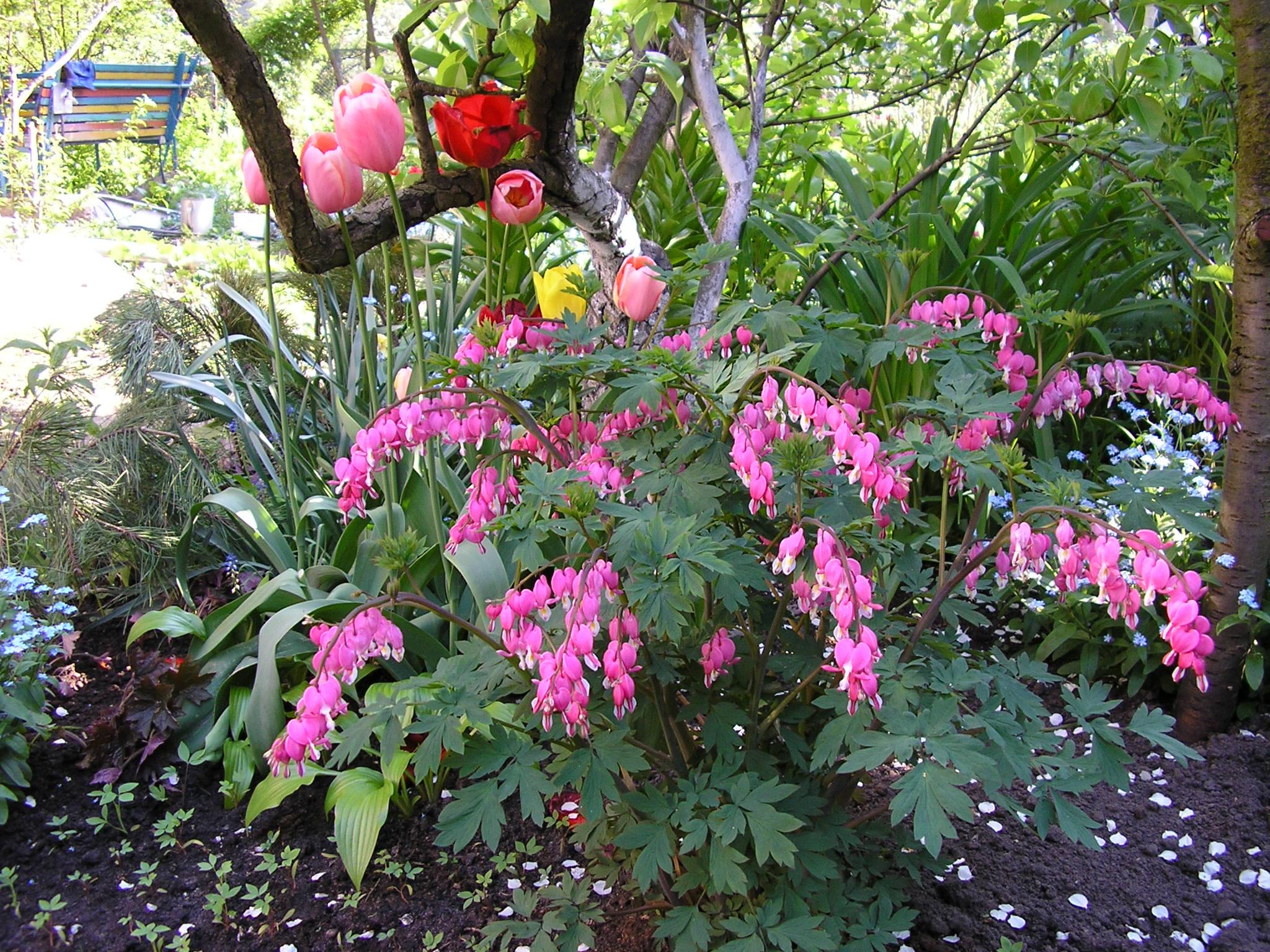 Дачные цветы и кустарники фото и названия