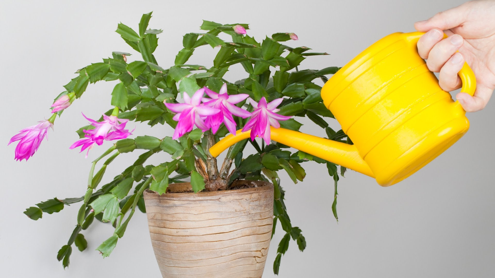 Чем поливать цветы в домашних условиях 252