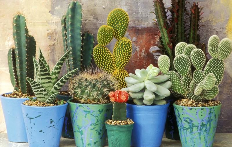 Какие есть виды кактусов