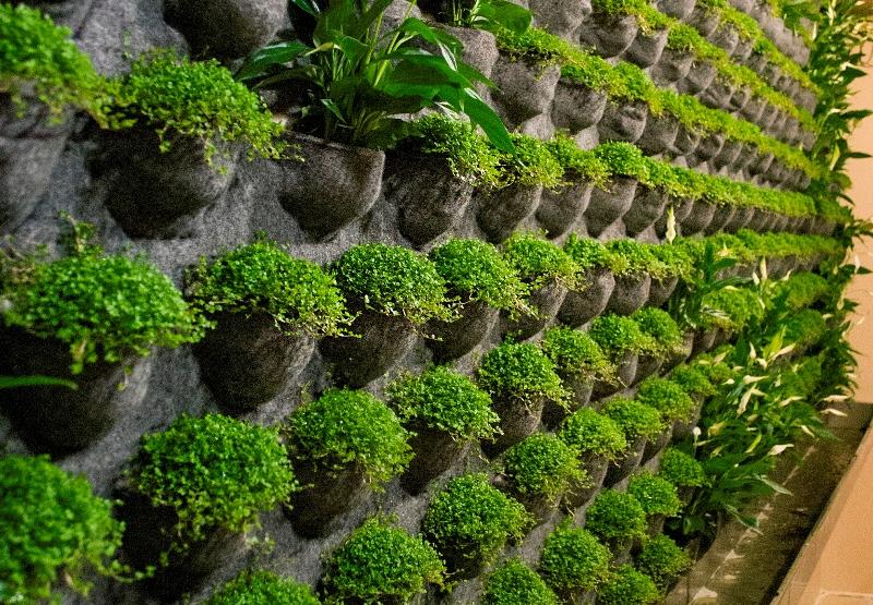 Что такое вертикальное озеленение