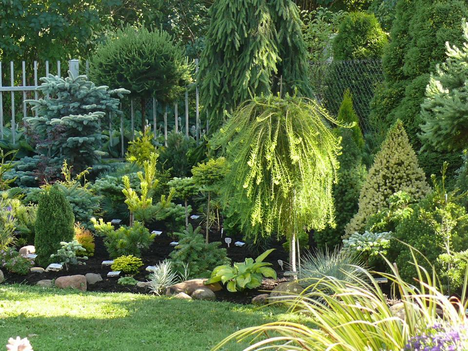 Лиственница в ландшафтном дизайне: виды и правила выращивания