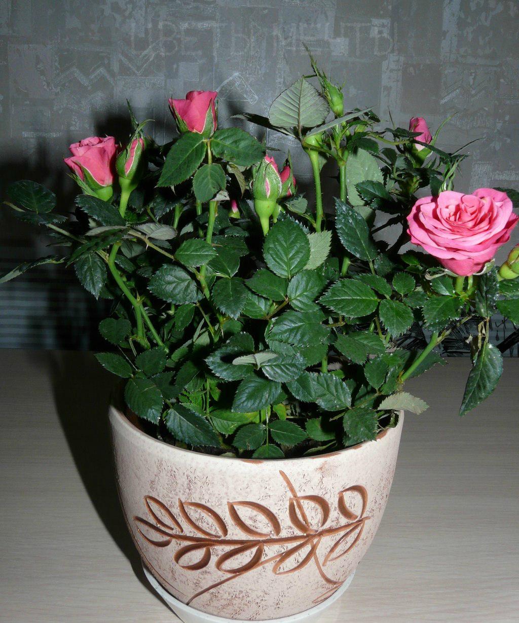 обереги картинки с розами домашними были