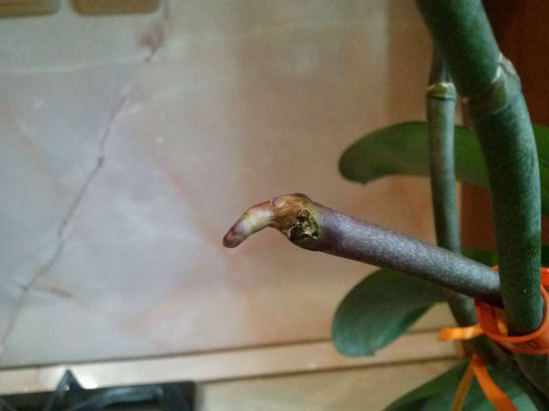 Как правильно ухаживать за прекрасной орхидеей в домашних условиях
