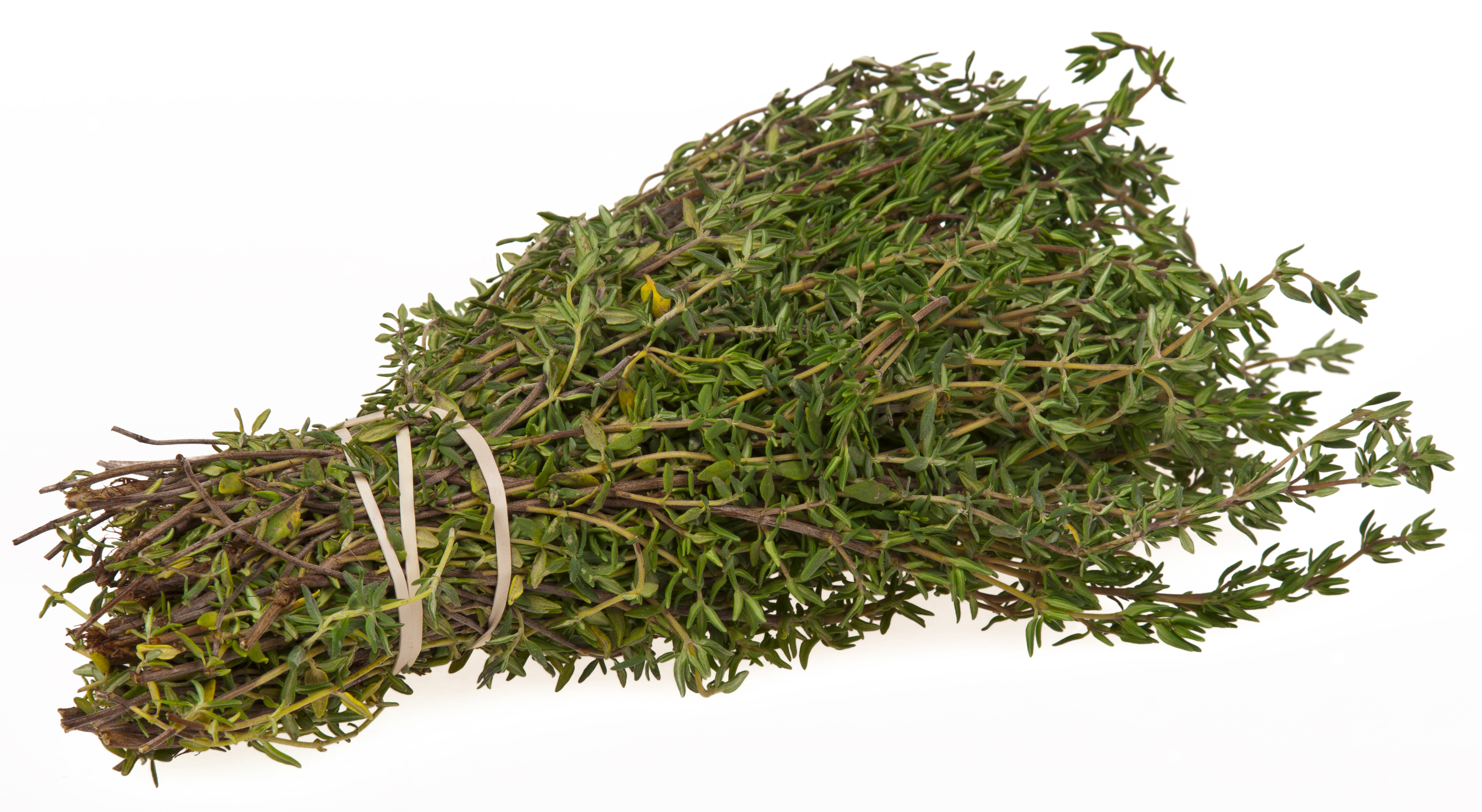 Чабрец (тимьян): особенности выращивания в квартире и условиях Подмосковья