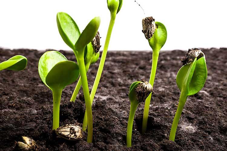 Семена на рассаду в 2019 когда сажать по календарю